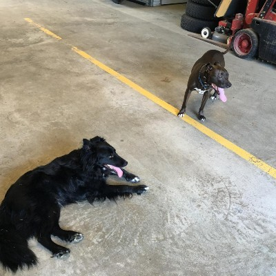 Store Haus and Southbury Self Storage Dogs