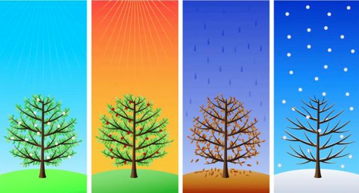 Blog image of trees going through seasons