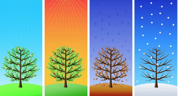 Trees in all four seasons