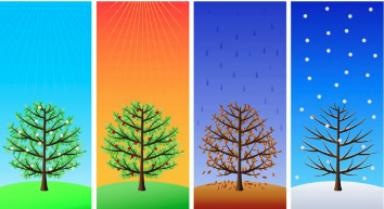 Blog image of trees going through seasons